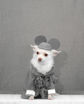 Anthony Rubio, 2017 Met Gala, Rei Kawakubo Inspiration, Dog Fashion, Comme Des Garcons, DSC_3255 NEW 200