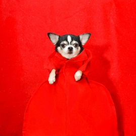 Anthony Rubio, 2017 Met Gala, Rei Kawakubo Inspiration, Dog Fashion, Comme Des Garcons, DSC_3398 NEW 600