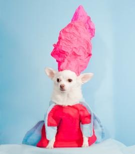 Anthony Rubio, 2017 Met Gala, Rei Kawakubo Inspiration, Dog Fashion, Comme Des Garcons, DSC_3523 NEW 300